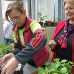 Chelsea Fringe Ljubljana 2014 – Bolšji sejem rastlin