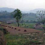 nepal-polje