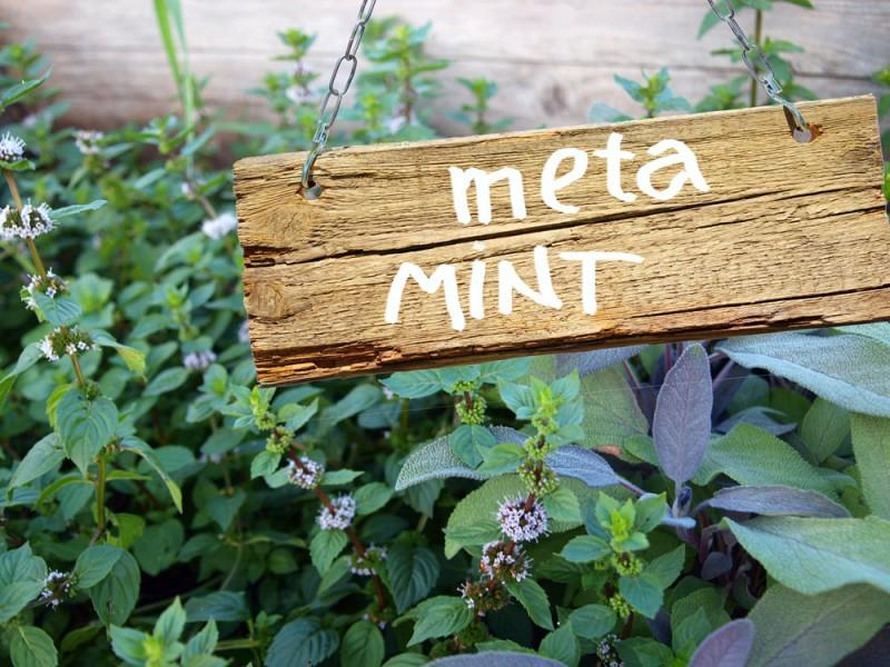 meta-mint